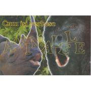Cum isi vorbesc animalele